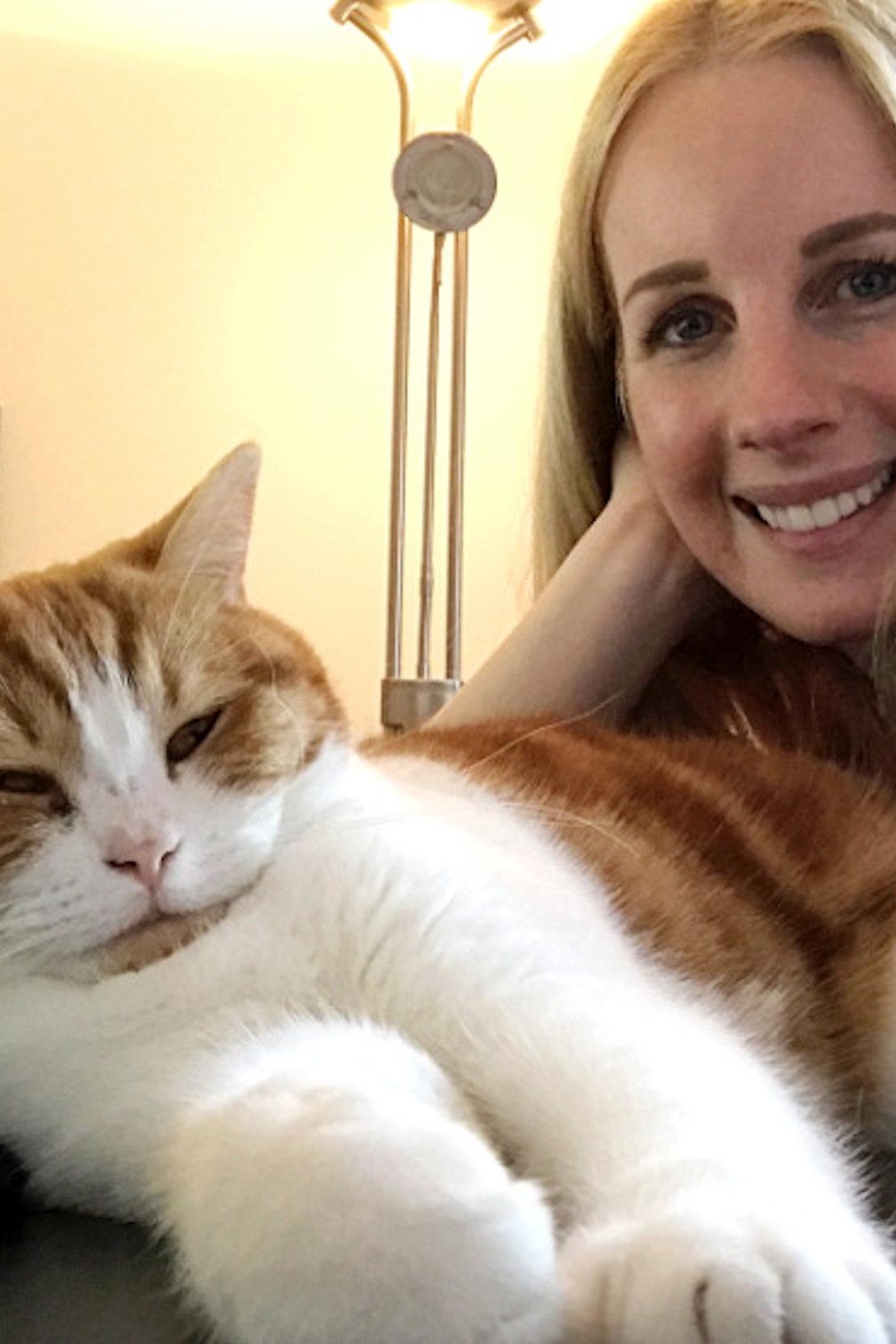 Waarom een kat in huis nemen een heel goed idee is