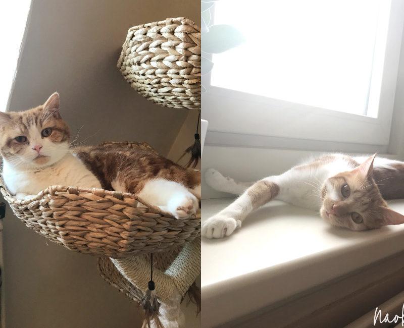 Wat ik geleerd heb van een tweede kat in huis nemen